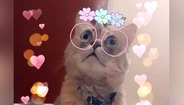 Snapchat-cat-filter